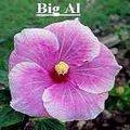 BIG_AL.jpg