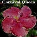 Carnival_Queen.jpg