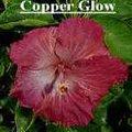 Copper_Glow.jpg