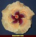Emerald Isle [Tammy_Faye x Silver_Rose] vanDuhn-JimP.jpg