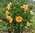 Freddie_Brubaker-bush.JPG