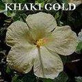 Khaki_Gold.jpg