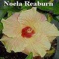 Noela_Reaburn.jpg