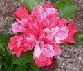 Pink_Bouquet2.jpg