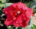 Red_Red_Wine.jpg