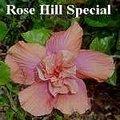 Rose_Hill_Special.jpg