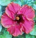 Tropical_Rainbow JimP.jpg